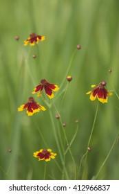 Flowers wearing a cloak