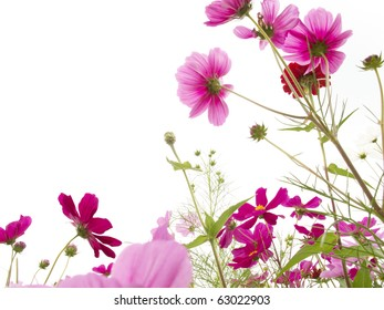 Flowers white background