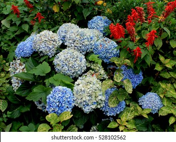 Flowers in white and blue, Hortencias, Novelos - Madeira