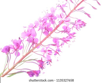 flowers of willow tea on white background