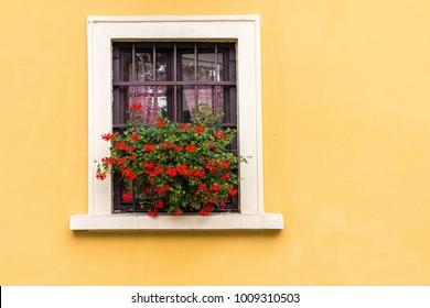 Flowers in the window of a vibrant yellow building.