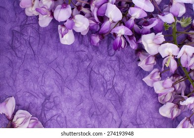 flowers of wisteria on a violet paper, background