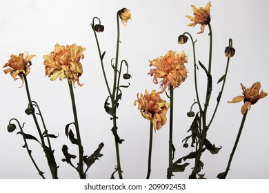 Flowers withered away through the passage of time