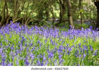 flowers in wood
