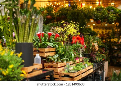 Lot of flowers in the wooden boxes at the street at flower market in Hongkong with defocused background