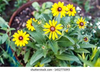 flowers with yellow petals grow in a pot that stands in the garden