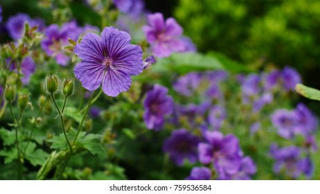 Flowery background - shallow depth of field