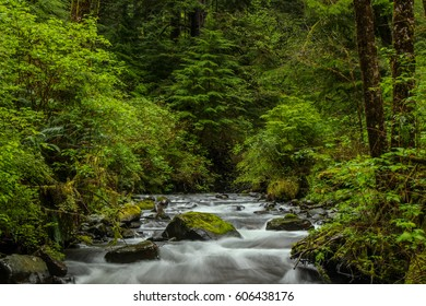 Flowing Creek along the Hiking Trails on the Oregon Coast