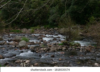 flowing river with many rocks and bolders in the river with small gentle water falls white water  trees on the river banks beautiful nature landscape