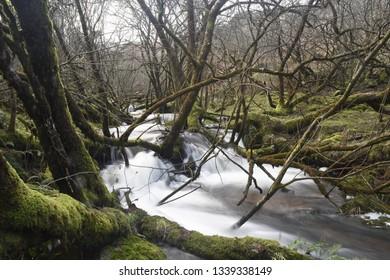 Flowing River on Dartmoor - Devon, England