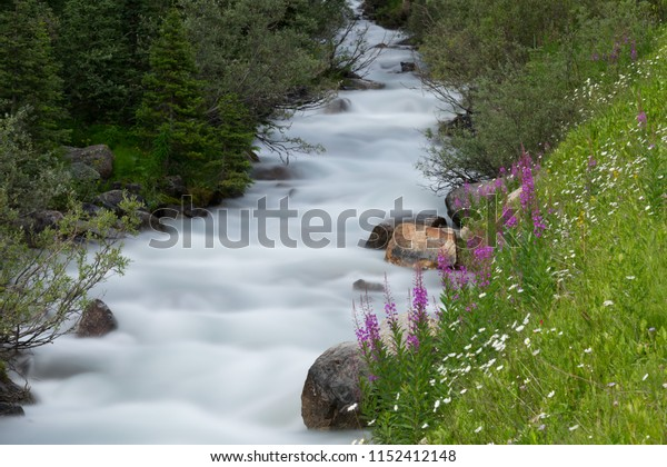 Flowing river runs past the flowers and beautiful green grass