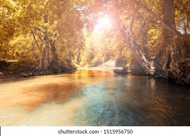 Flowing stream with colorful yellow orange trees forest, Kentucky USA