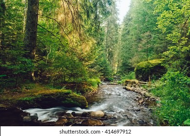 Flowing stream in forest