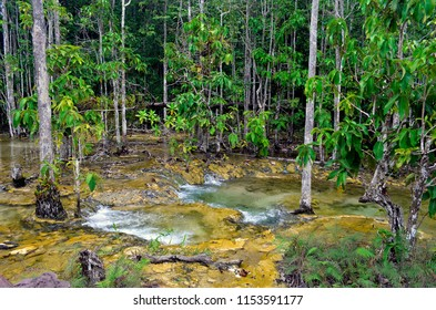 Flowing water along the footpath to Sa Morakot in the Khao Nor Chuchi forest