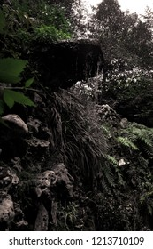 Flowing water  in florest.