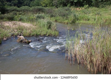 Flowing water with reeds