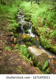 Flowing water in small creek closeup in Ylläs, Finland