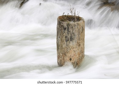 flowing water stream and gray tree