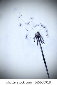 fluff of a dandelion flower seeds