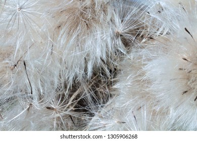 Fluffy background from natural material, natural colors