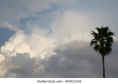Fluffy Billowy Cumulus Clouds in the Blue Summer Sky in Florida with a Palm Tree Silhouetted to the Right