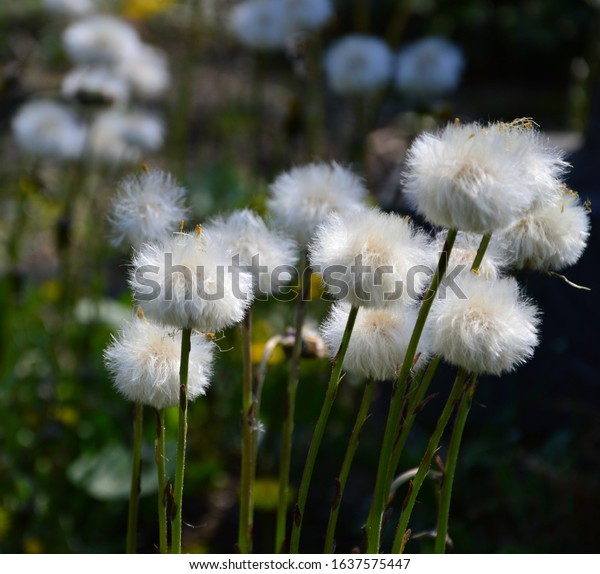 fluffy-blossoms-garden-600w-1637575447.j