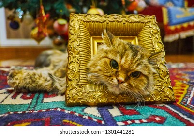 The fluffy brown tabby pussycat poses in vintage bronze frame, lying on the carpet.