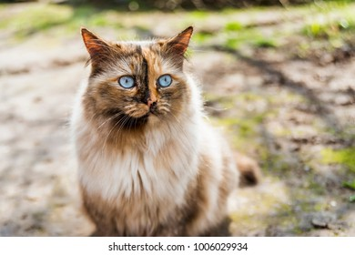 fluffy cat with bright blue eye looking away by sunny day