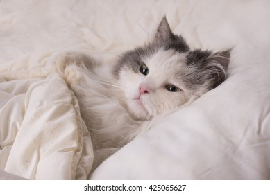 fluffy cat dozing in bed