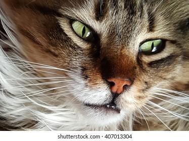 Fluffy cat face