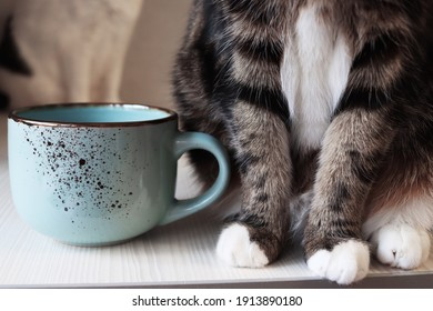 Fluffy cat feet and ceramic blue teacup. Comfort at home. Living with a pet. cat with cup of coffee. Morning routine