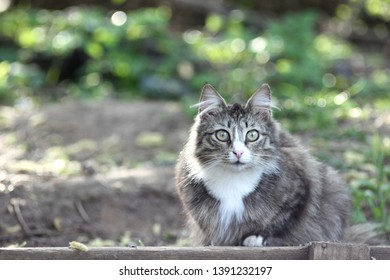Fluffy cat in the forest looks into the camerа