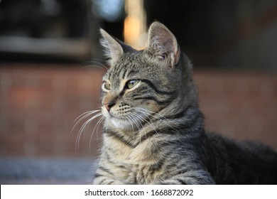 fluffy cat with long whiskers sitting