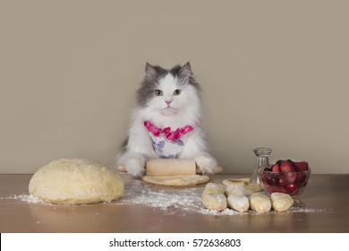 fluffy cat prepares cakes for her family