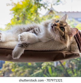 A fluffy cat sitting on a floating window seat with colourful scenery in the background