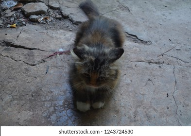 A fluffy cat sitting and relaxing on the concrete floor looking for something while waiting for the owners to feed, in adorable as well as naughty looking, expressing soft and mild emotion