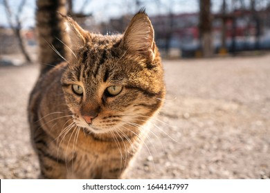 Fluffy cat walks along the street. Pet cat, affectionate and long-haired