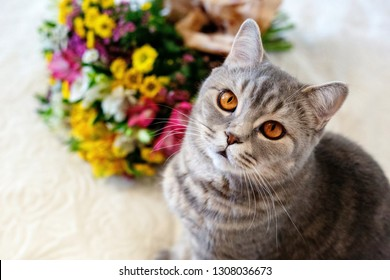 fluffy cats sit next to a lush bouquet