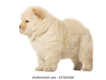 Fluffy Chowchow Puppy Isolated Over White Stock Photo Edit Now