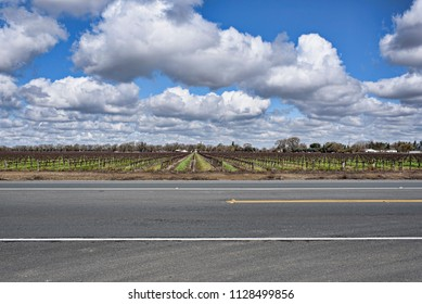 Fluffy Clouds Above the Vineyard Along the Highway