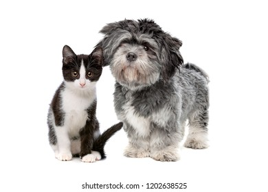 fluffy dog and cat in front of a white background