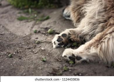 fluffy dog sleeping, paws
