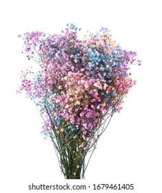 Fluffy dried colored Gypsophila isolated
