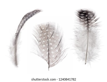 fluffy feathers isolated on white background