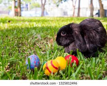 Fluffy foxy rabbit on grass with Easter eggs in park.