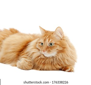 fluffy ginger cat lying isolated on white background