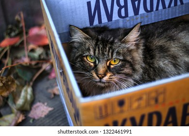 fluffy gloomy gray cat lying in a box on the street
