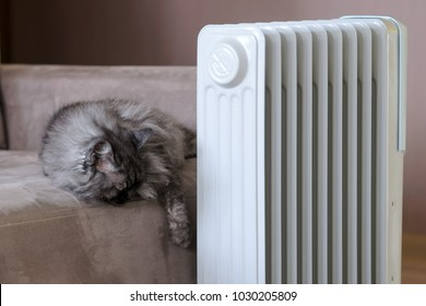 Fluffy gray cat sleeping on sofa near electric mobile oil heater