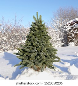 Fluffy green Christmas tree stands on white snow