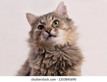 0c2459603358 Long Haired Cat Images, Stock Photos & Vectors | Shutterstock